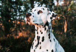 Animal Diagnostics