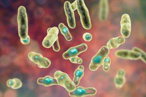 Bacteria & Parasites
